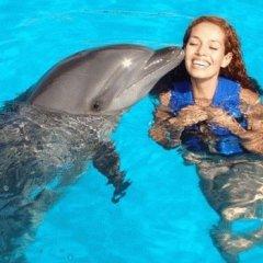 К чему снится дельфин по сонникам Ванги, Нострадамуса