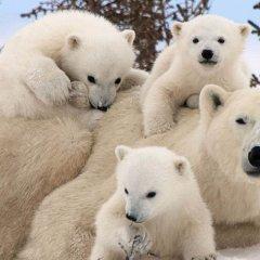 К чему снится бурый медведь по основным значениям и сонникам
