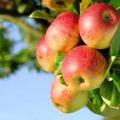 К чему снятся красные яблоки по толкованиям авторитетных сонников
