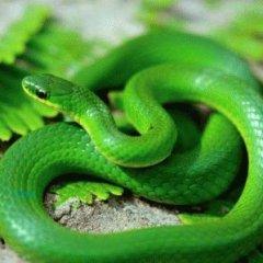 К чему снятся маленькие змеи