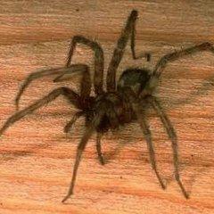 Сонник: к чему снится белый паук - толкование снов по Фрейду, Миллеру, Ванге