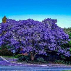 К чему снится дерево по сонникам - Миллера, Цветкова и других