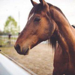 К чему снится белая лошадь по известным сонникам