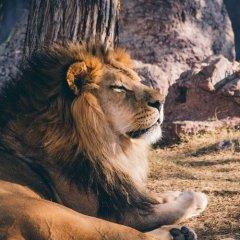 Совместимость Льва и Девы - причины конфликтов