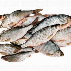 К чему снится чистить рыбу по соннику Фрейда, Миллера, Лоффа