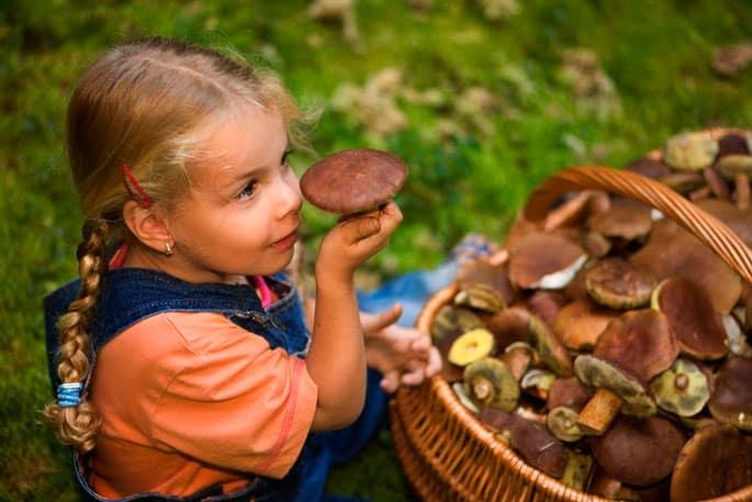 К чему снится сбор грибов беременной 26