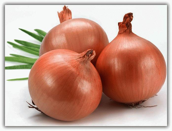присушка на луковицу