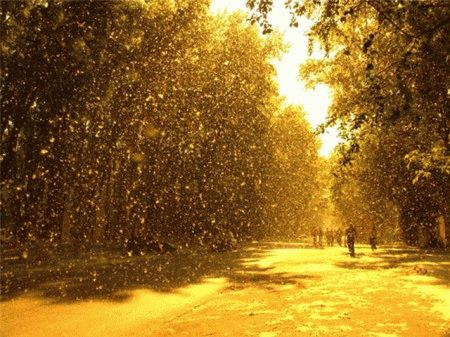 Сонник ходить по снегу летом