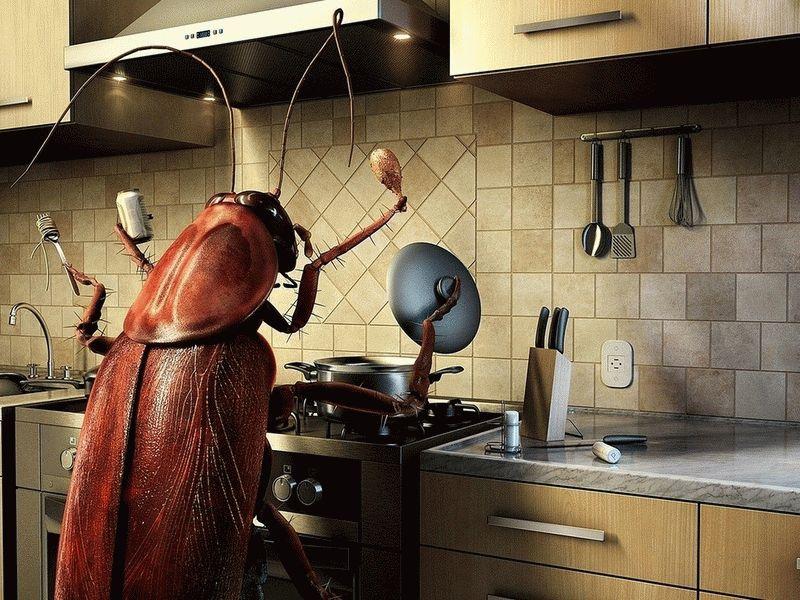К чему снится много живых тараканов в квартире?