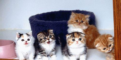Сонник много котят во сне к чему снится много котят