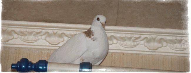 К чему снится птица залетевшая в окно?