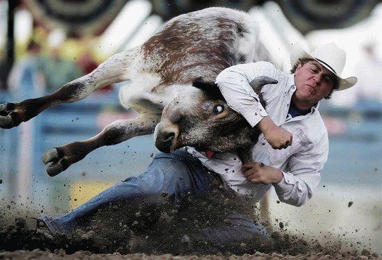 К чему снится рогатый бык, который нападает на вас?