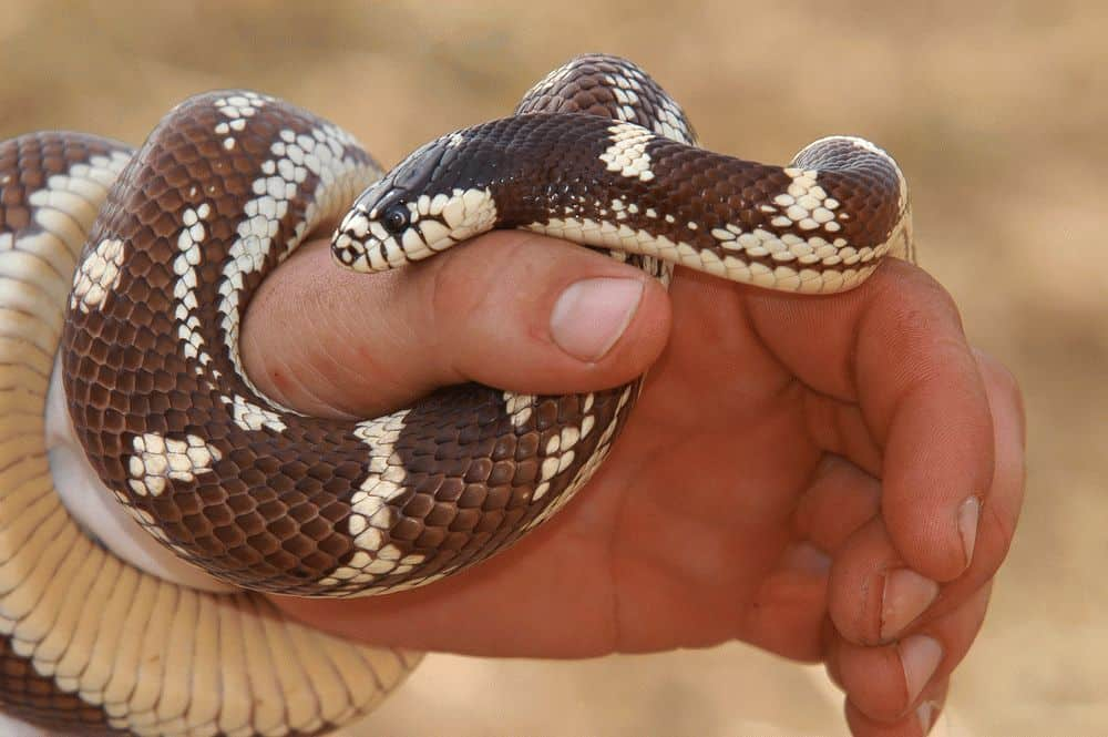 К чему снится укус змеи во сне?