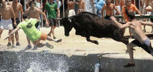 Сонник рогатый бык