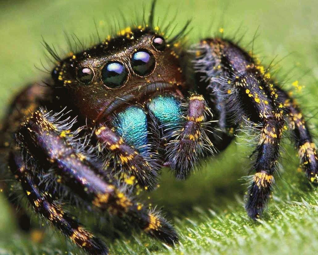 К чему снится паук — большой, черный и мохнатый?