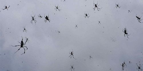 К чему снятся большие и маленькие пауки?
