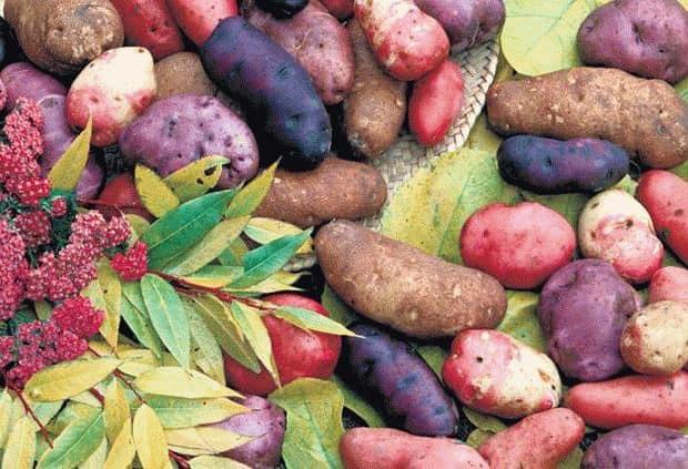 К чему снится копать картошку во сне?