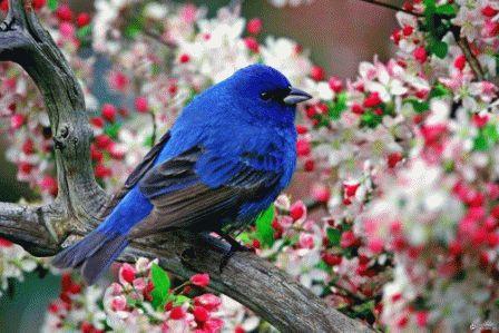Сонник: что значит птица которая залетела в окно?