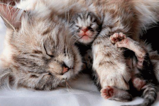 К чему снится что кошка родила котенка