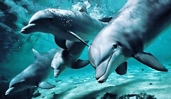 Сонник: дельфин в море для девушки