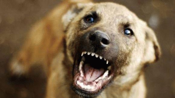 К чему снится собака которая кусает за руку