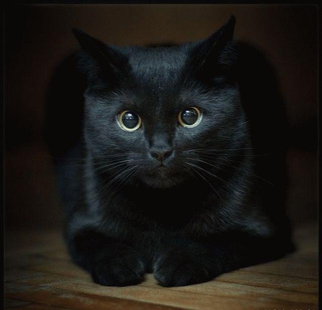 Кошка в доме - приметы и поверья