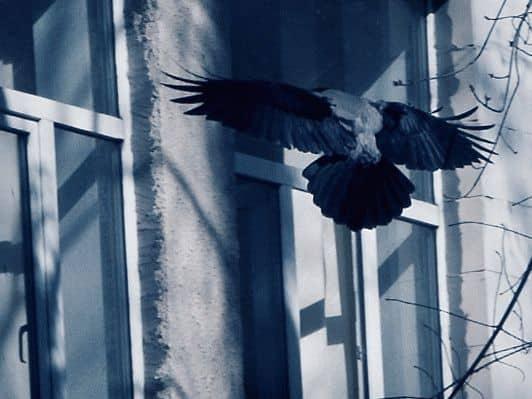 Примета: птица врезалась в окно