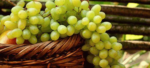 К чему снится виноград зеленый спелый кушать