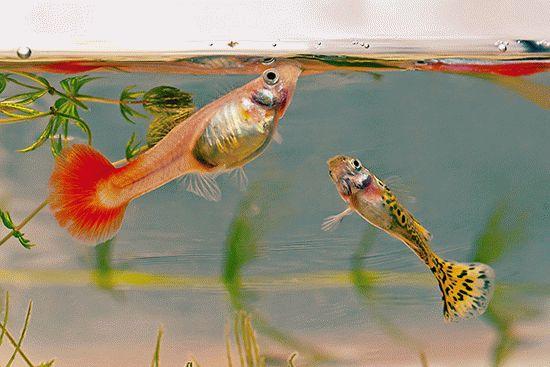 К чему снятся аквариумные рыбки - сонник