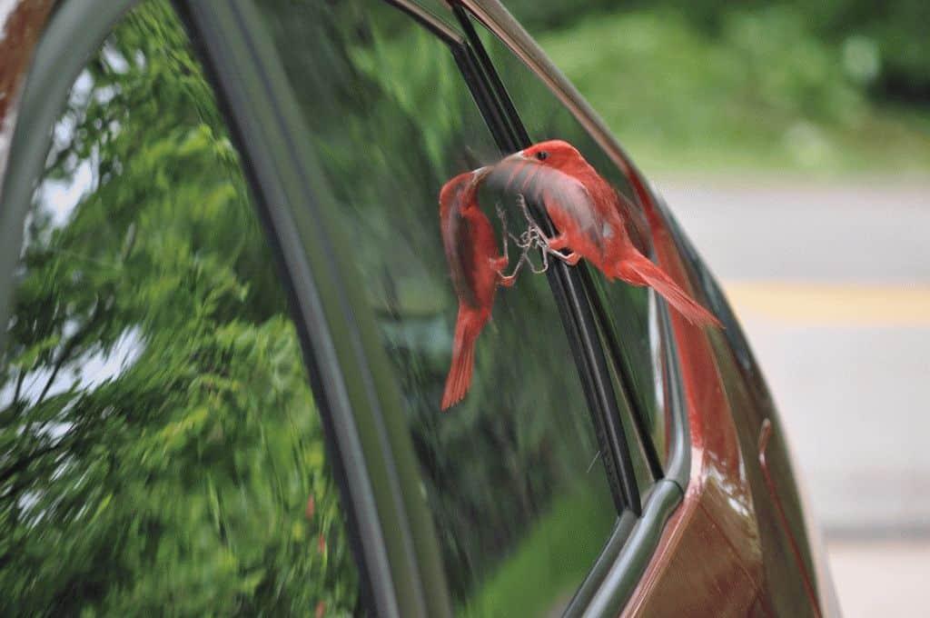 Примета птица бьется в окно не страшная а наоборот