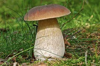 К чему снятся белые грибы?