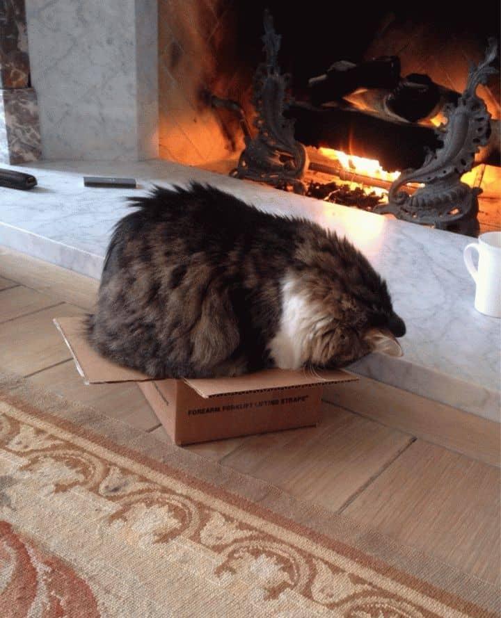 Почему кошку первой пускают в дом: приметы