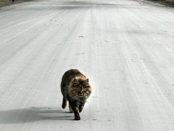 Примета: сбить кошку на машине