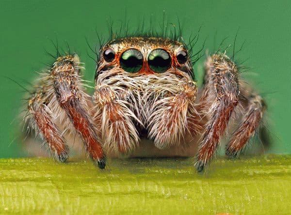 Примета: увидеть паука