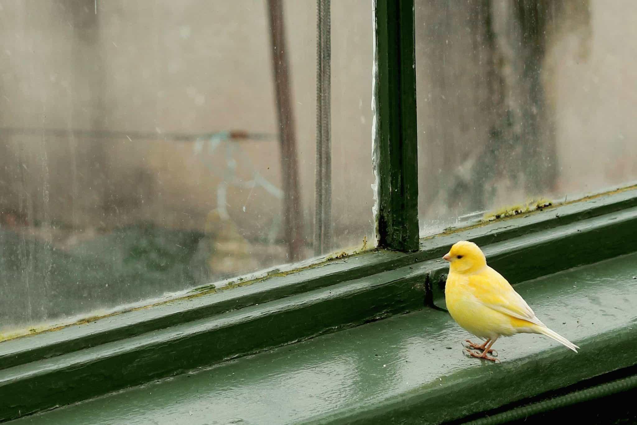 Картинка птицы и окна