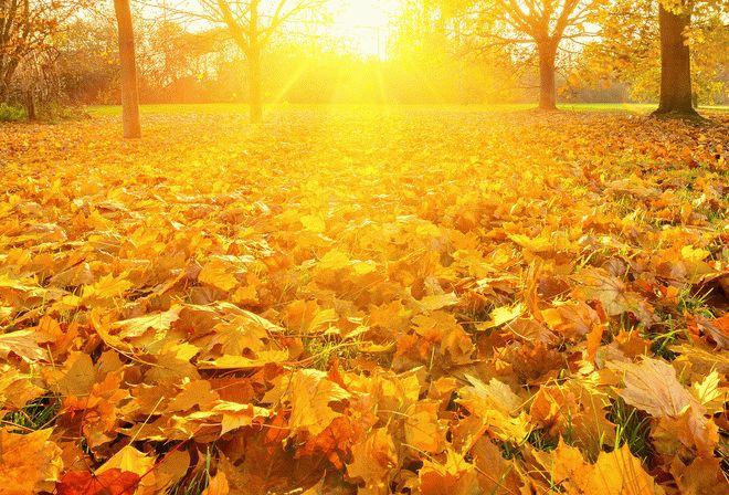 Приметы осени - на хорошую и плохую погоду