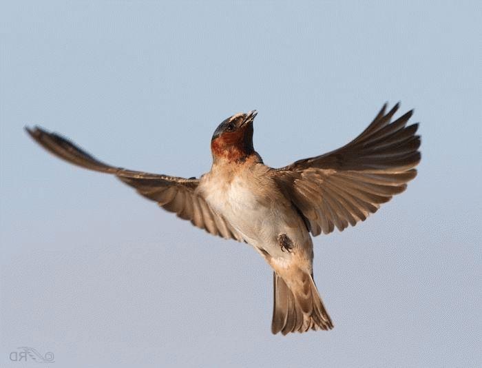 К чему птица в залетела в дом: народные приметы