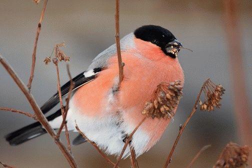 Приметы с птицами на окне