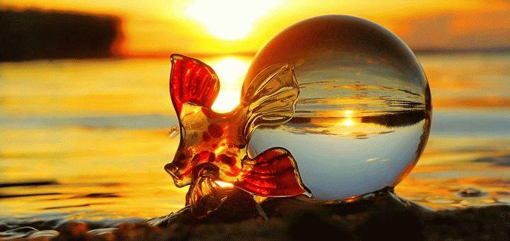 золотая рыбка исполняет желание