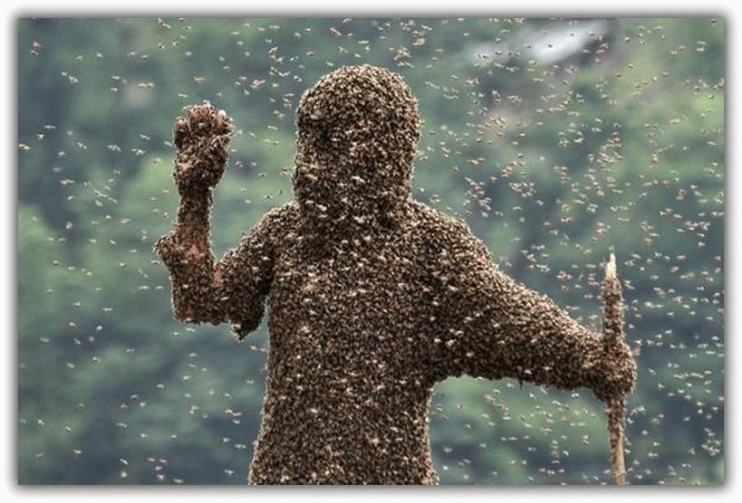 человек полностью в пчелах