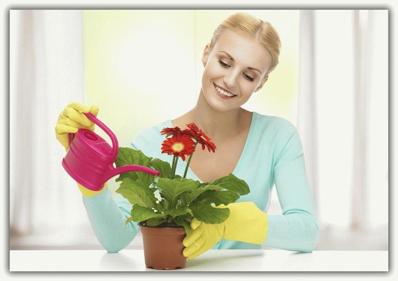 К чему снятся цветы в горшках по сонникам?