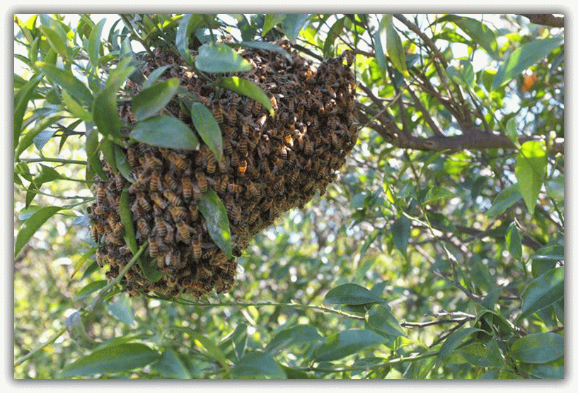 улей с дикими пчелами