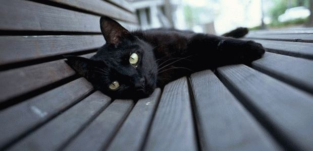 К чему снится мертвая кошка?