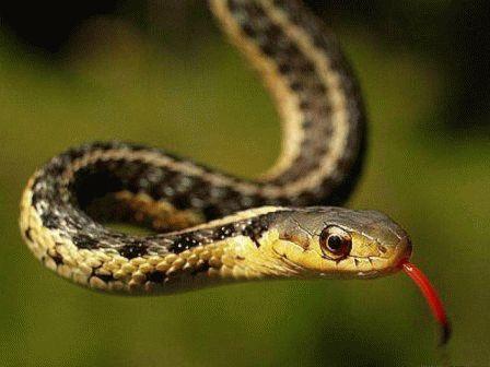 К чему снятся убитые змеи?