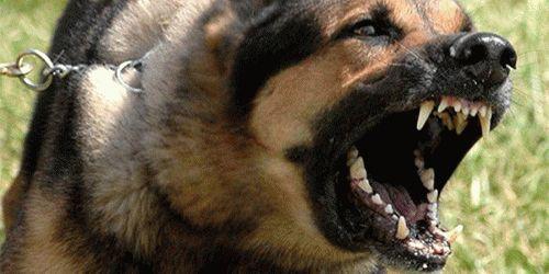 К чему снятся собаки во сне?