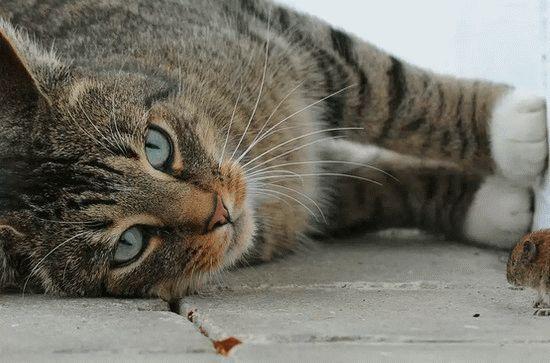 К чему снятся дохлые кошки много на сайте Сонник Гуру