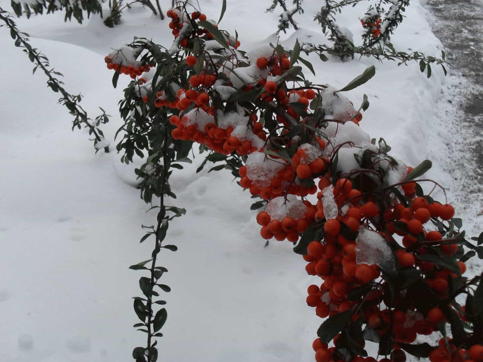 Приметы первого снега