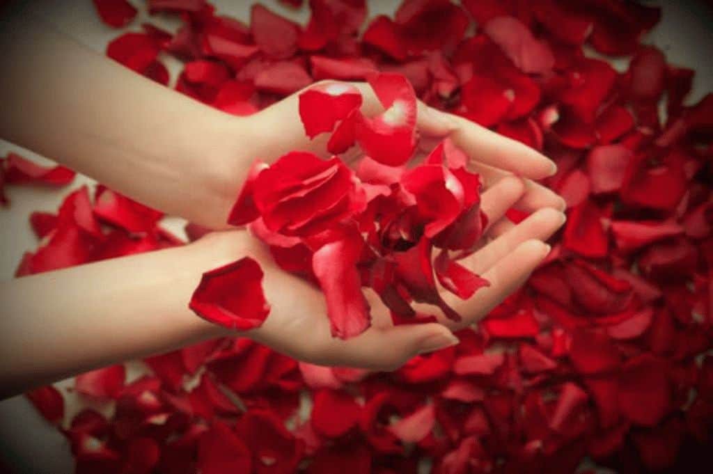 Гадание по лепесткам розы - найдите ответ на свой вопрос