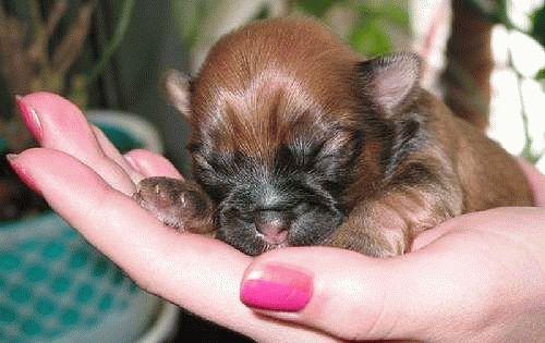 маленькие собачки по соннику