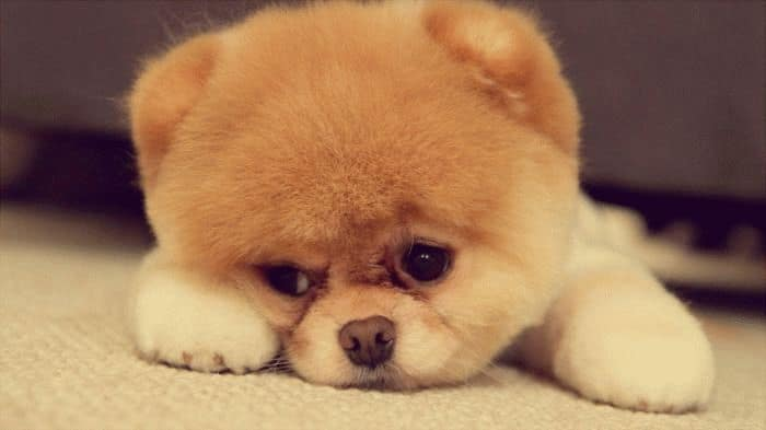 Картинки по запросу собачки